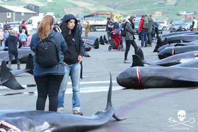 """Sea Shepherd : """"le Danemark est complice du massacre des dauphins"""" Cp_29082019-fr-02-sm"""