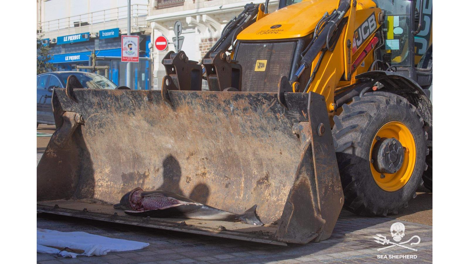 Macabre découverte sur une plage de Jard-sur-mer