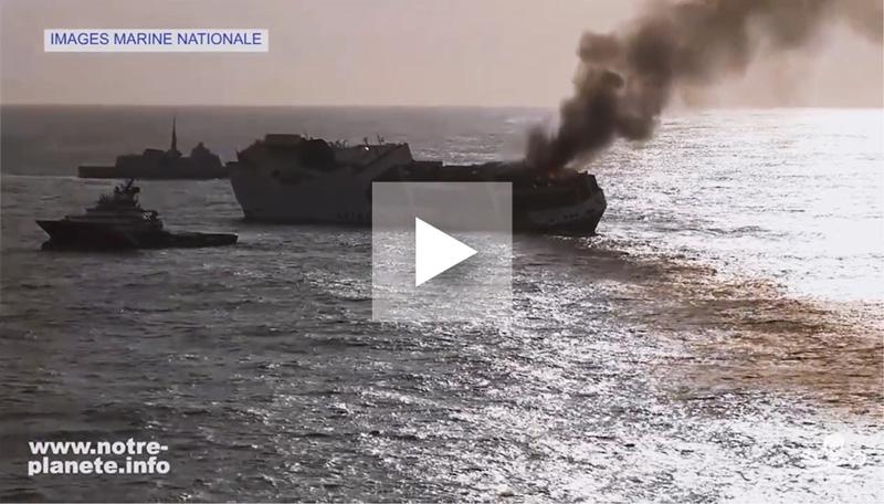 Le pétrole du Grande America est déconfiné et continue de tuer les animaux marins