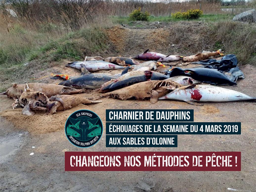 Hécatombe de dauphins : carton rouge pour les Sables d'Olonne et Saint Gilles Croix de Vie