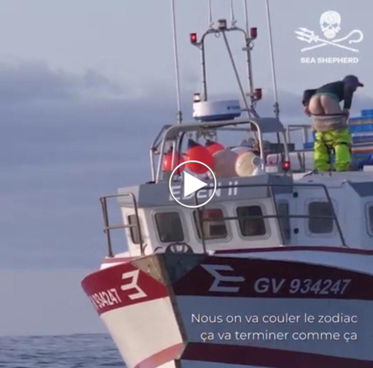 Vidéo Sea Shepherd France